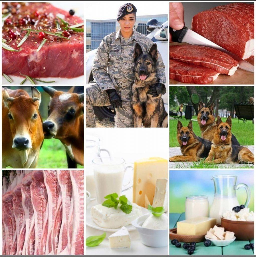 Спеціальність 204 «Технологія виробництва і переробки продукції тваринництва».